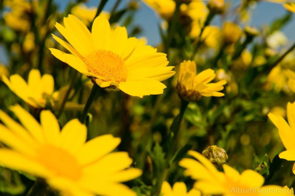 Pólenes primaverales…¿Cómo prevenir sussíntomas?