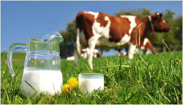 ¿ Alergia a la leche o intolerancia a la lactosa? ¿Qué lasdiferencia?